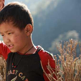 Little Sherpa