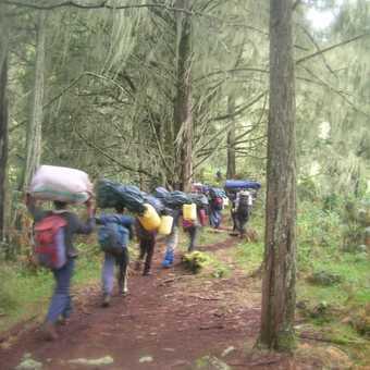 Porters-heavy loads thru. the rain forest.