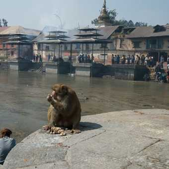 Burning Ghats - Pashupatinath