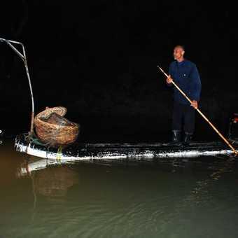 Cormorant fishing Li River