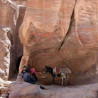 You could always take a donkey up the climb to the Monastery - Petra