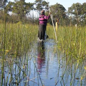 Mokoros in the delta