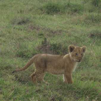 The cutest cub