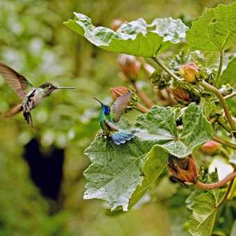 Hummingbirds in a bit of an argument.  They were right little bullies to each other.