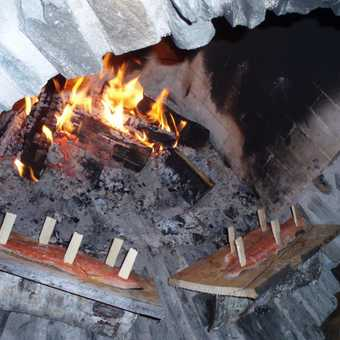 Salmon cooking over log fire