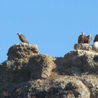 Vultures in the morning sun