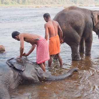 Elephant Wash