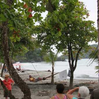 sloth, beach, tourists, local on a hammock