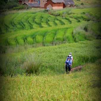 Descent through rice
