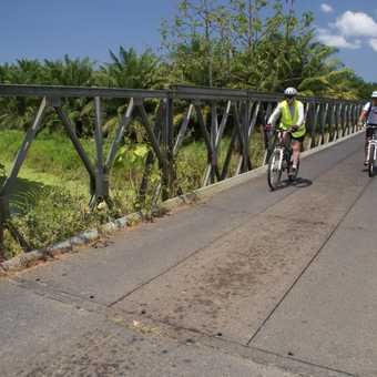 Cycling through the old banana plantations
