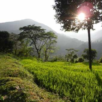 Marsyangdi Valley thru Rice paddies