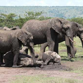 Elis at Mara Mudhole