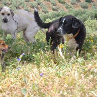 Cortijo dogs