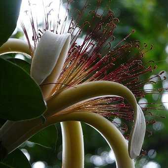 Lakeside flower