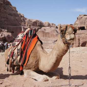 Bedouin Cuppa - Petra