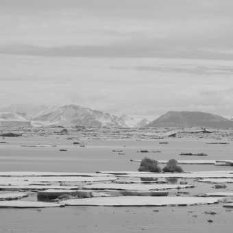 Southern Elephant Bull Seals: Grytviken - South Georgia