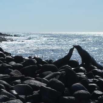 Nuzzling sea lions