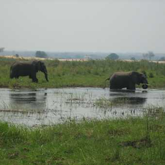 The first herd of  elephants we saw enjoying the water