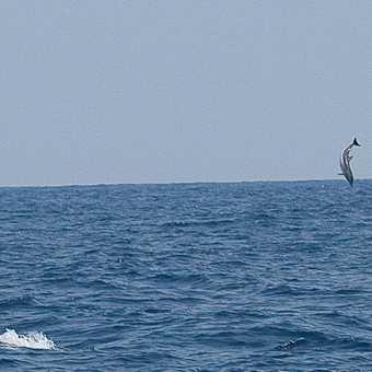 Dolphin air