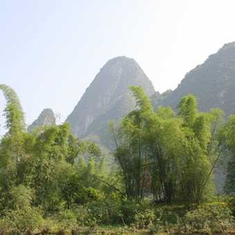 Bamboo and karst formations