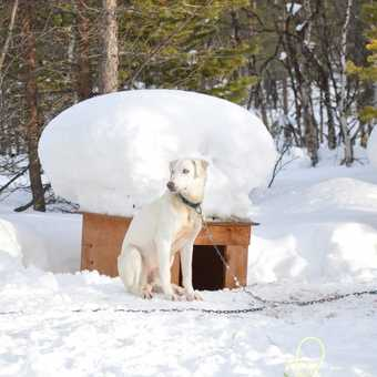 The kennel has a hat of snow