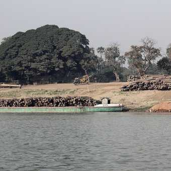 Teak logs transported on the river Irrawaddy