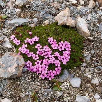 Purple Wildflowers on Alkhornet