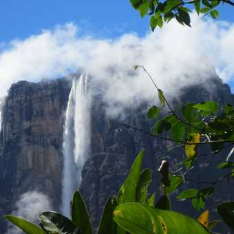 Angel Falls from our jungle camp
