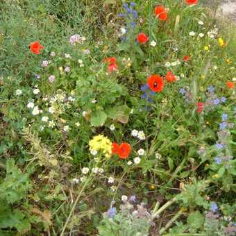 spring flowers en route