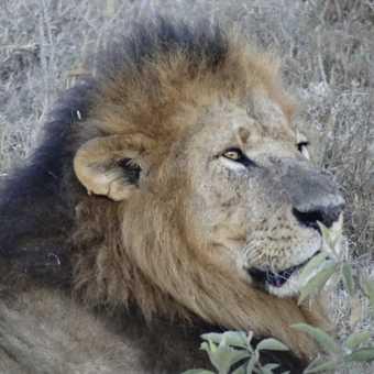 Rhino, Nakuru.