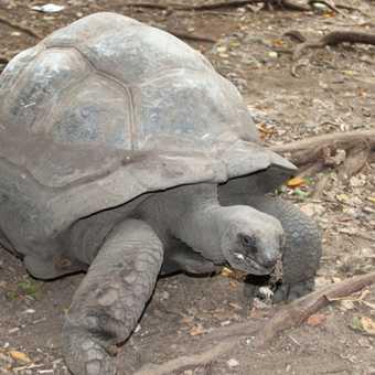giant tortoise - Prison Island, Zanzibar