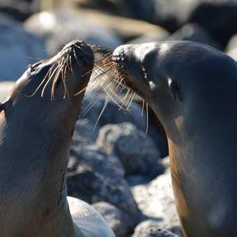 Affectionate sea lions