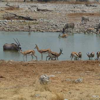 Waterhole in Etosha