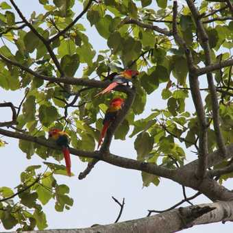 red macaws encountered whilst driving along