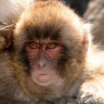 Snow Monkey 03, Yudenaka