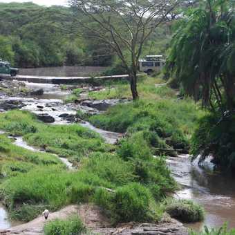Serengeti River Crossing