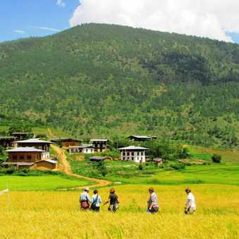 Through paddy fields to monastery of Divine Madman