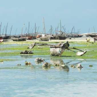 Zanzibar ..... collecting shells