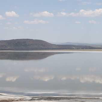 mirrir image lake with flamingos