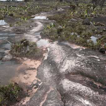 The well used paths on the top of Roraima were worn from black to pink