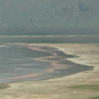 Amazing Lake Nakuru