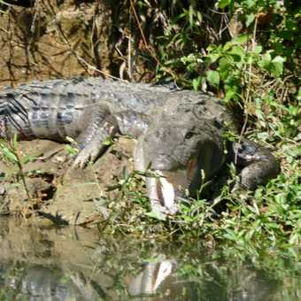 Chitwan National Park can be beautifully tranquil