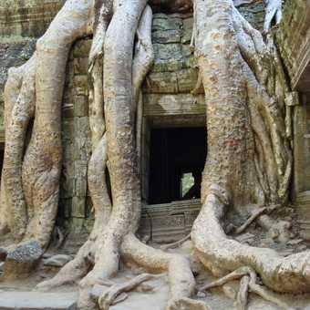 Temple Door - Tah Prom, Cambodia