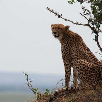 Keeping an eye on the Mara