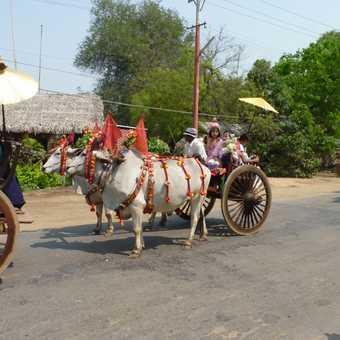 A new nun hauled by a bullock cart!