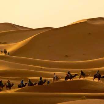 Early morning in the sahara