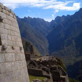 Pichu View