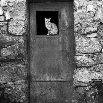 Shepherd's hut plus cat