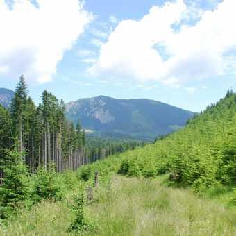 Europe's last true wilderness