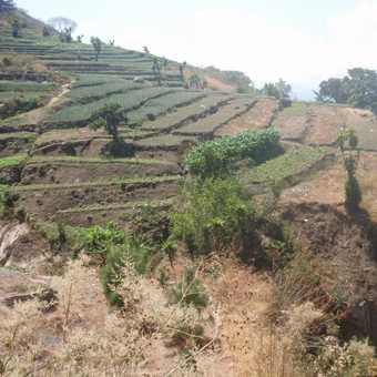 terrace fields at Guatemala highland